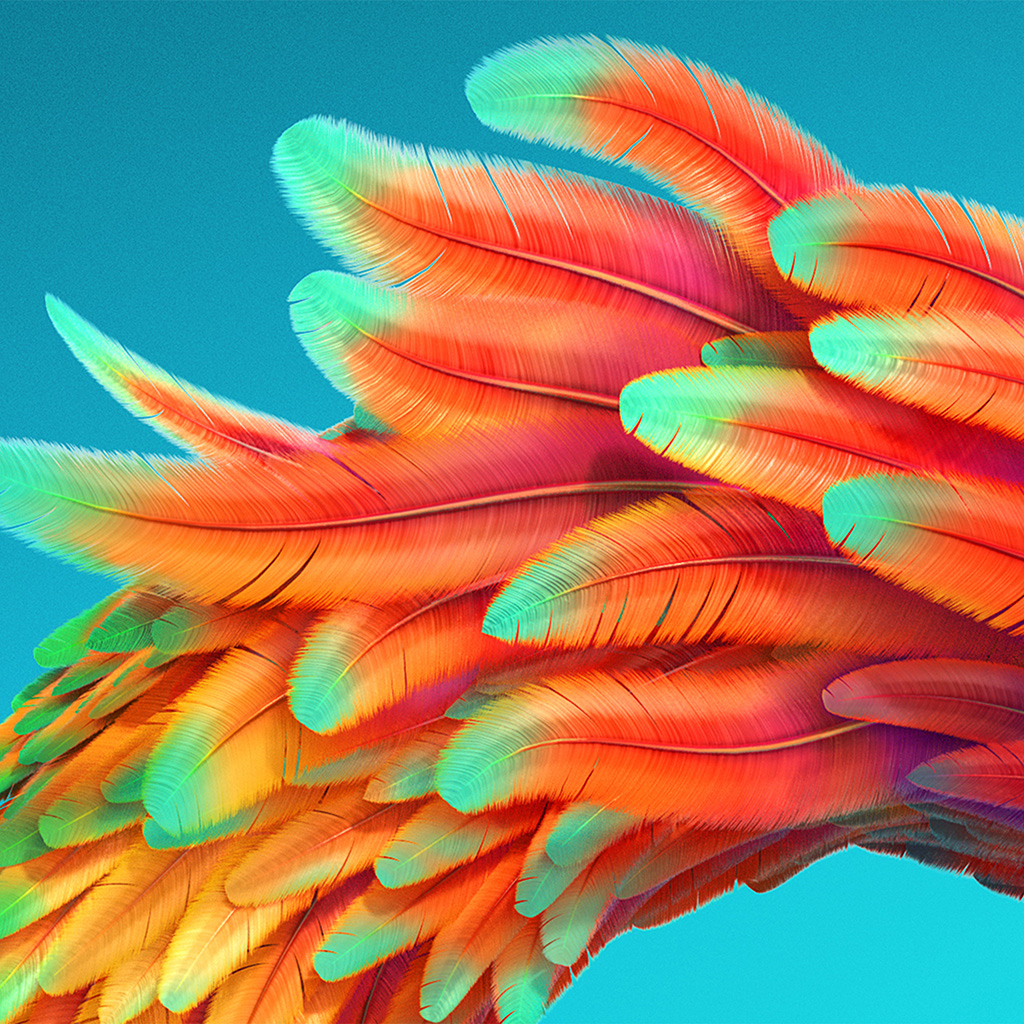 wallpaper-vz54-bird-color-rainbow-red-pattern-background-wallpaper