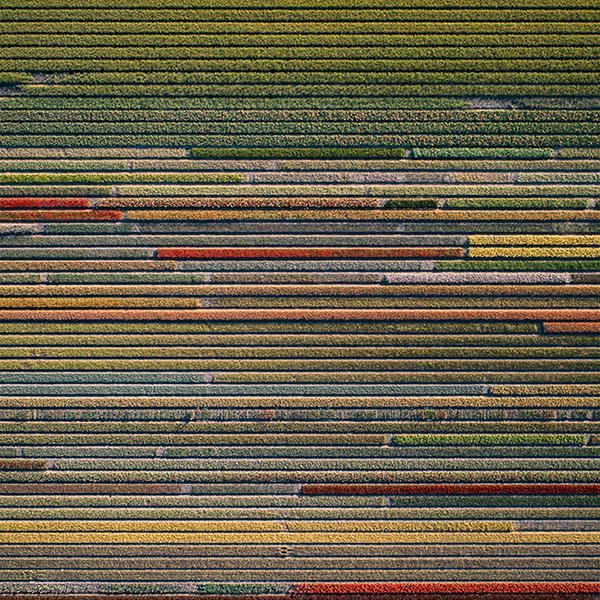 iPapers.co-Apple-iPhone-iPad-Macbook-iMac-wallpaper-wa89-flower-farm-earthview-color-pattern-background-wallpaper