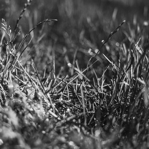 papers.co-mb63-wallpaper-bw-grass-d-1-wallpaper