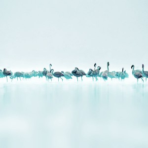papers.co-me80-flamingos-blue-peace-animal-nature-birds-1-wallpaper