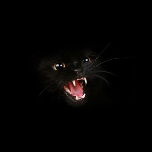 papers.co-mj54-black-cat-roar-animal-cute-1-wallpaper