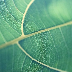 papers.co-mj83-leaf-bokeh-green-nature-1-wallpaper