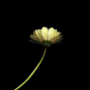 papers.co-mk67-lonely-flower-dark-simple-minimal-nature-1-wallpaper