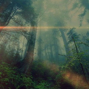 papers.co-mn32-forest-wood-fog-flare-nature-green-1-wallpaper