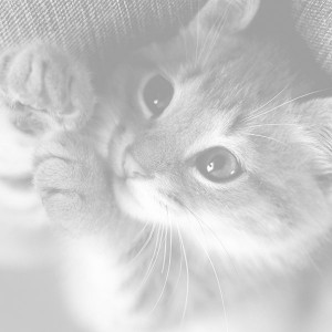 papers.co-mq78-cute-cat-kitten-nature-animal-white-1-wallpaper