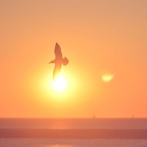 papers.co-mt92-sunset-bird-pink-sea-gal-1-wallpaper