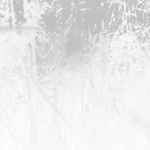 papers.co-mw28-sunset-nature-flower-fall-mountain-field-white-bw-flare-1-wallpaper