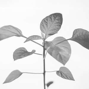 papers.co-na33-flower-leaf-simple-minimal-nature-bw-1-wallpaper