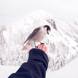 papers.co-nb92-bird-in-my-hand-snow-winter-cold-animal-1-wallpaper